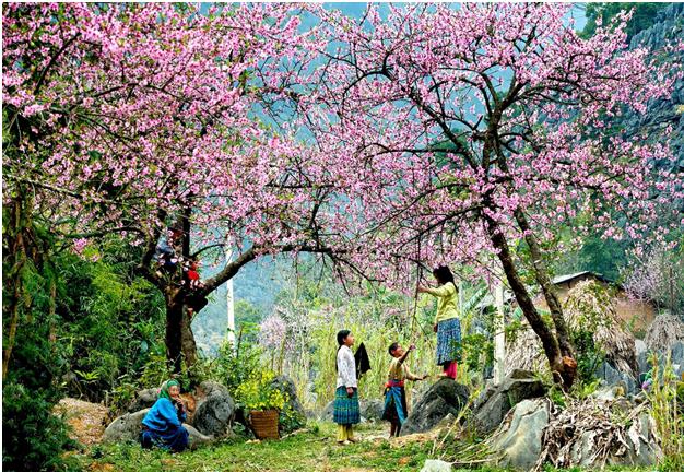 Du Lịch Mai Châu thời điểm nào đẹp nhất